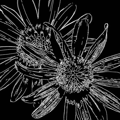 Photograph - Daisy Drawing Black And White by HH Photography of Florida