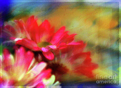 Photograph - Daisy Dreams by Judi Bagwell