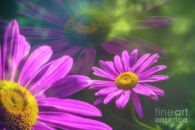 Abstract Flowers Royalty-Free and Rights-Managed Images - Daisy dreams by Veikko Suikkanen