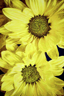 Photograph - Daisy Duo by Sandi OReilly