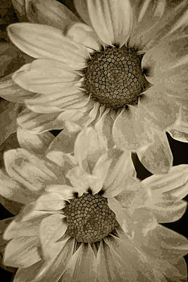 Photograph - Daisy Duo Sepia by Sandi OReilly