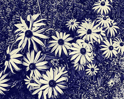 Photograph - Daisy Field Blueprint by Tony Grider