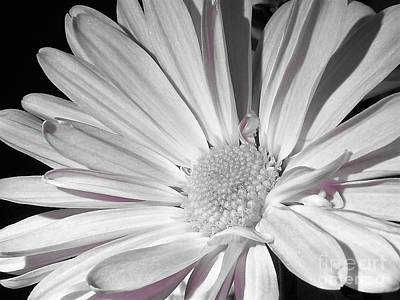 Photograph - Daisy Flower by Chad and Stacey Hall