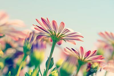 Photograph - Daisy Flower Field by Anna Om