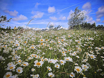 Daisy Heaven Art Print by Angela Aird