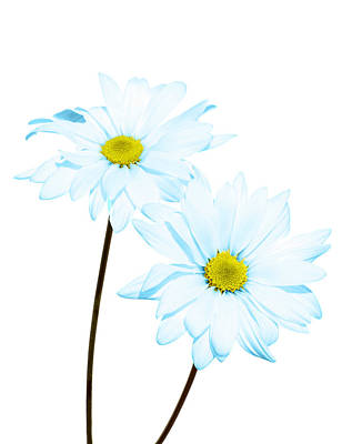 Photograph - Daisy In Blue by Al Hurley