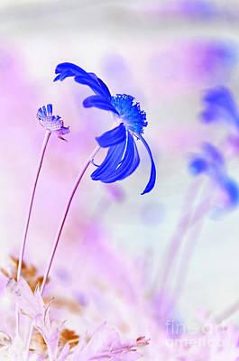 Daisy In Blue Art Print by Kaye Menner