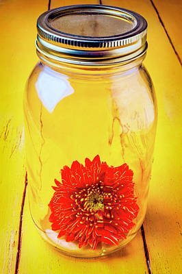 Daisy In Glass Jar Art Print by Garry Gay
