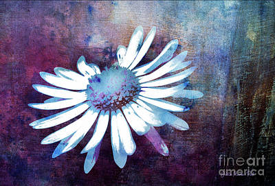 Mixed Media - Daisy by Jutta Maria Pusl