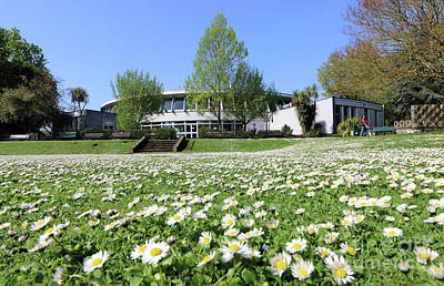 Photograph - Daisy Lawn At Ewell Surrey by Julia Gavin