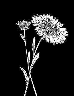 Mixed Media - Daisy On Black Background by Masha Batkova