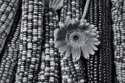 Gerbera Photograph - Daisy On Indian Corn Black And White by Garry Gay