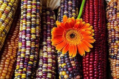 Gerbera Photograph - Daisy On Indian Corn by Garry Gay