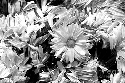 Photograph - Daisy Petals  by Jim Corwin