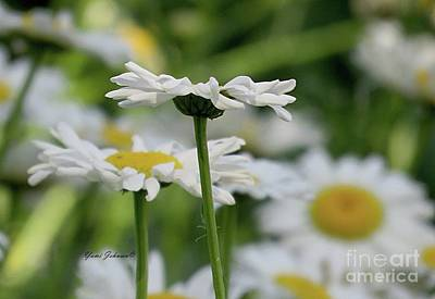 Photograph - Daisy Petals  by Yumi Johnson
