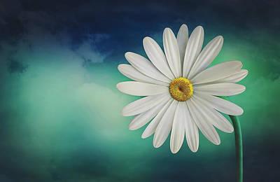 Photograph - Daisy by Pixabay