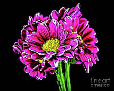Photograph - Daisy Poms 1-1 by Ray Shrewsberry