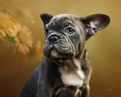 French Bull Dog Photograph - Daisy - Puppy Art by Jordan Blackstone