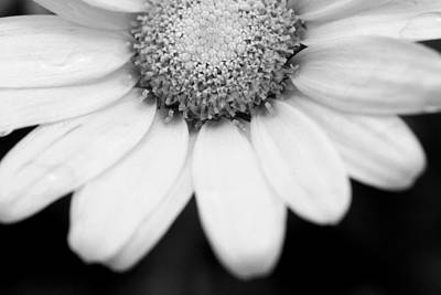 Photograph - Daisy Smile - Black And White by Angela Rath