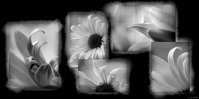 Photograph - Daisy Study by Lauren Radke
