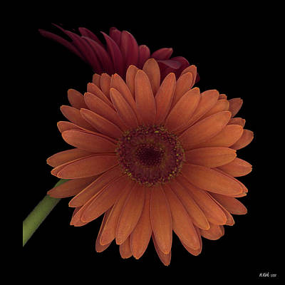 Photograph - Daisy Tilt by Heather Kirk