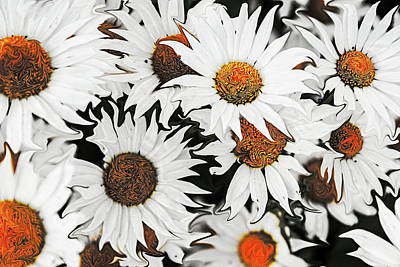 Daisy With A Twist Art Print