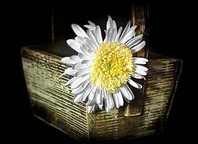Photograph - Daisy With Basket by Diana Angstadt