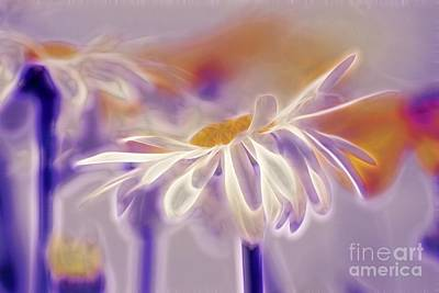 White Daisy Photograph - Daisyday - 101b by Variance Collections