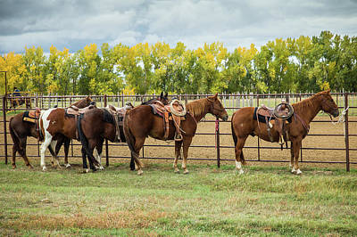 Photograph - Dakota Fall Horses by Steven Bateson