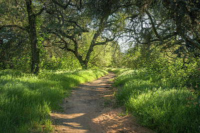 Photograph - Daley Ranch - The Engelmann Oak Trail by Alexander Kunz