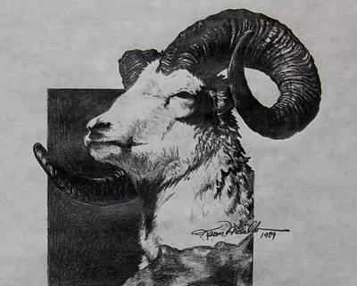 Drawing - Dall Ram by Karon Melillo DeVega