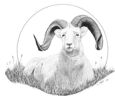 Drawing - Dall Sheep by Lawrence Tripoli