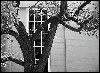 Photograph - Tree In Front Of Window by Roberta Byram