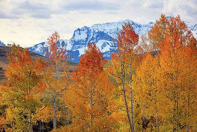 Photograph - Dallas Divide Aspens by Johnny Adolphson
