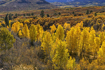 Photograph - Dallas Divide Near Ouray Co Dsc08122 by Greg Kluempers