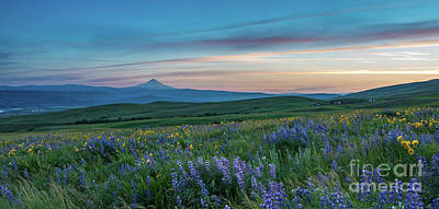 Photograph - Dalles Ranch Wildflower Meadows Sunset by Mike Reid