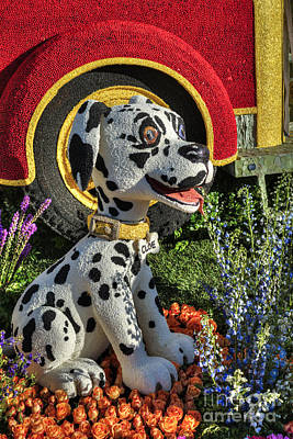 Photograph - Dalmatian Firehouse Puppy by David Zanzinger