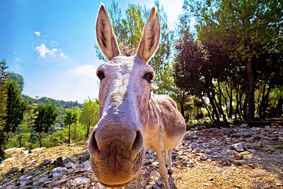 Photograph - Dalmatian Island Donkey In Nature by Brch Photography
