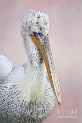 Photograph - Dalmatian Pelican #2 V2 by Judy Whitton