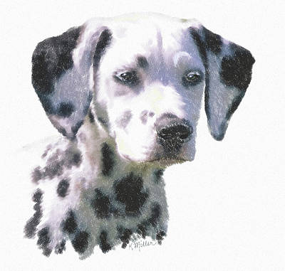 Dalmatian Puppy Art Print by Kathie Miller