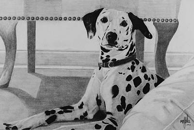 Dalmation Drawing - Dalmation by Stephen McCall