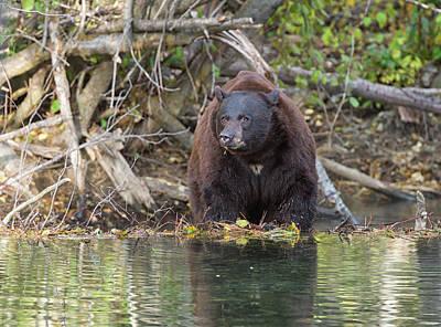 Photograph - Dam Bear by Scott Warner