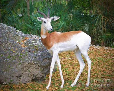 Addra Gazelle Painting - Dama Gazelle by Judy Kay