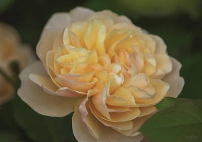 Photograph - Dame Judi Dench Rose by Teresa Wilson