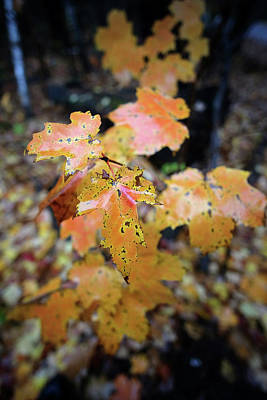 Photograph - Damp Autumn by Patrick Groleau