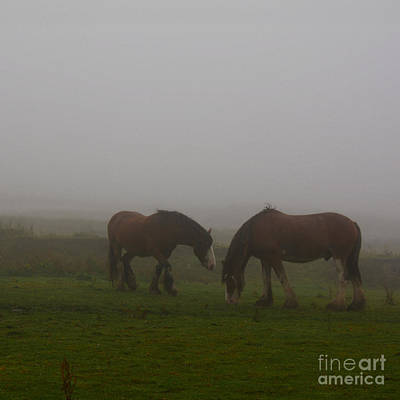 Photograph - Dampened And Shrouded In Mist  by Paul Davenport