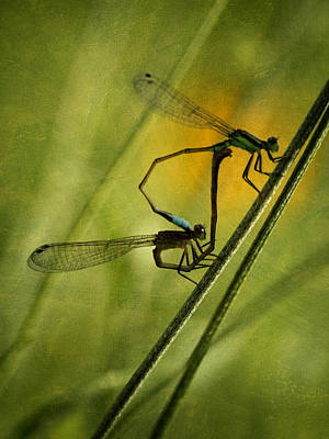 Photograph - Damsel Fly Love II by Charles McKelroy