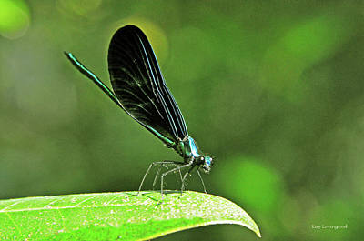 Photograph - Damselfly On A Leaf by Kay Lovingood