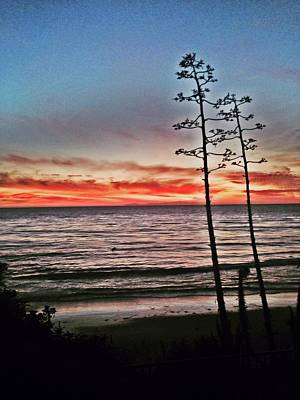 Photograph - Dana Point Sunset by Alexis Lee Scott
