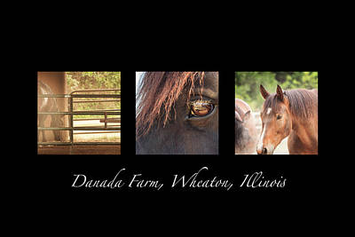 Photograph - Danada Farm Horse Triptych by Joni Eskridge
